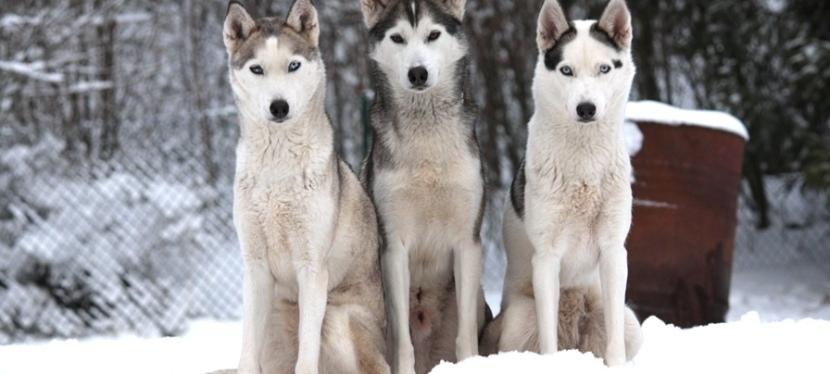 Om att ha hundartillsammans