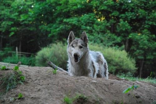 En vanvårdad hund - eller en hund som får leva det liv hon allra helst önskar?