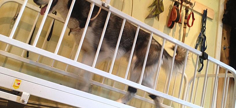 Skritt – hundtränarens bästavän